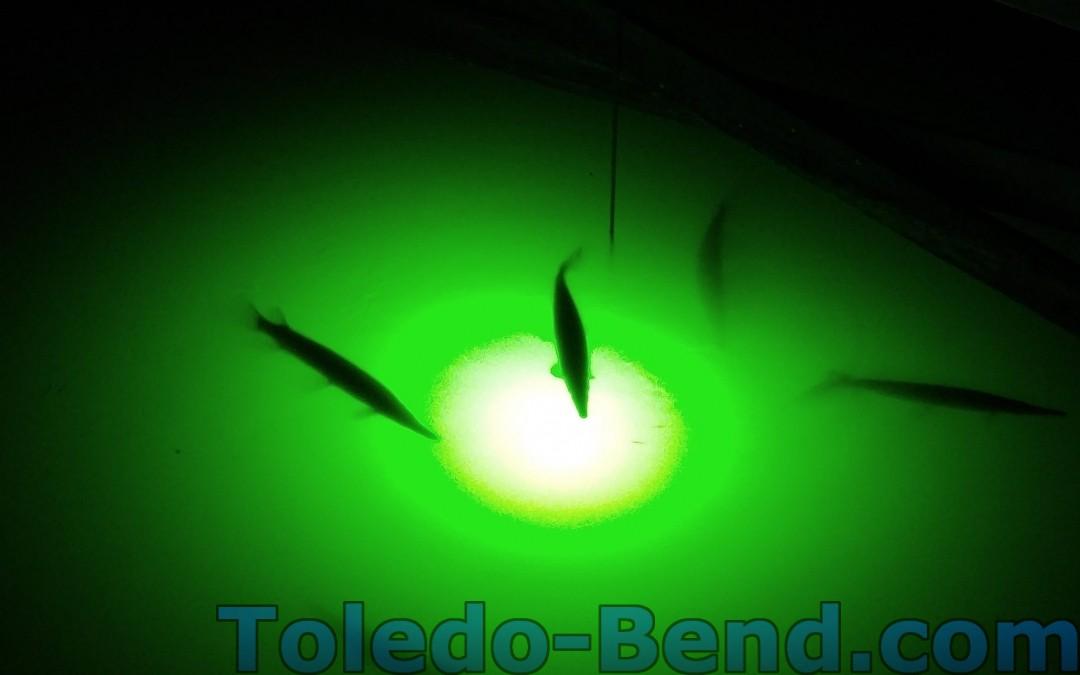 Gar at Toledo Bend