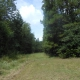 Unrestricted Acreage with Marketable Timber!