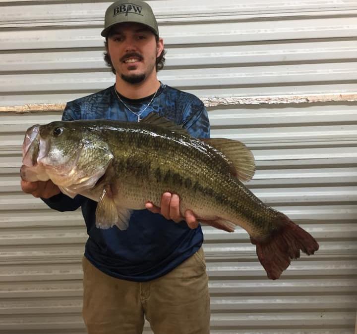 Wesley Miller huge largemouth bass Toledo Bend!